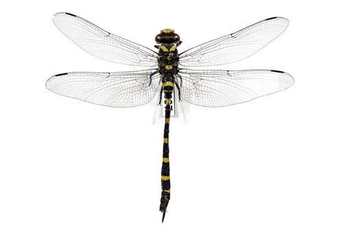 Prirodne nauke, insekti, vilin konjic