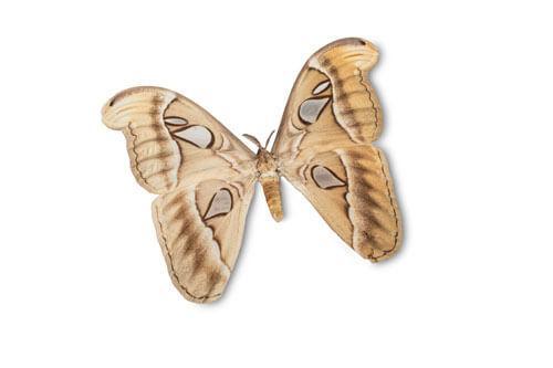 Odjeljenje za prirodne nauke, zoologija, insekti, kukci, leptir, Atlas