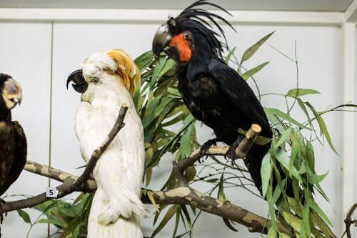 Odjeljenje za prirodne nauke, zoologija